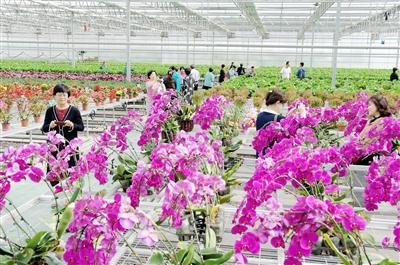 甘肃临夏国家农业科技园区发挥农业产业化龙头企业