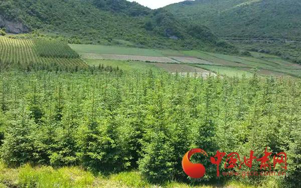 定西漳县:小苗木铺就脱贫绿富路