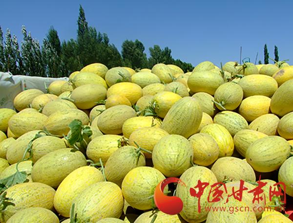 瓜州西湖镇:万亩蜜瓜喜获丰收