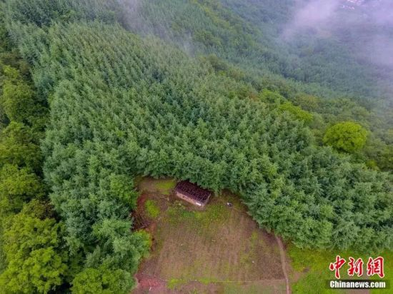 图为航拍田永平所造林地,中间为简易小木屋。冉创昌 摄