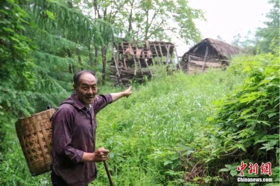 田永平背着背篓,指着不远处的简易小木屋。冉创昌 摄