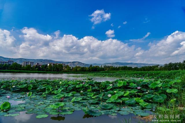 【醉美麦积】系列之:翠湖荷花满池塘