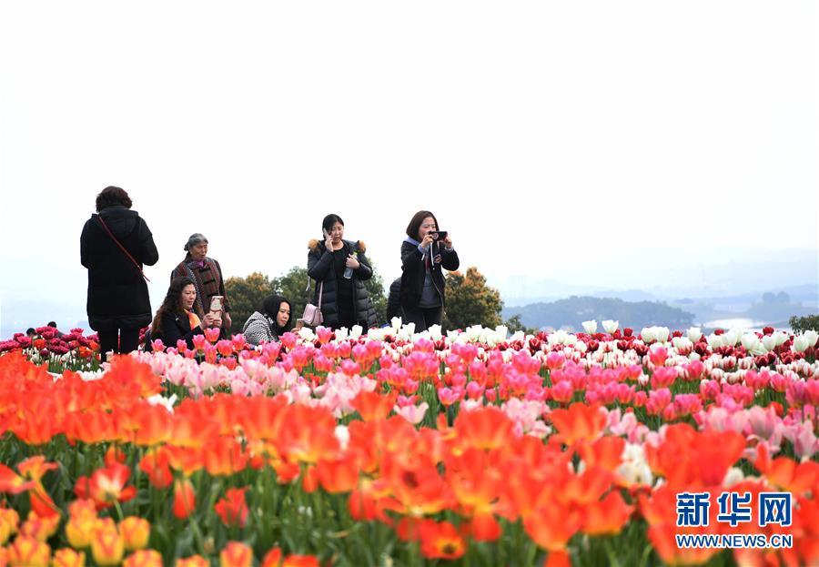 (图文互动)(4)臭水变清水催生一批生态产业——重庆最大人工湖的绿色蝶变