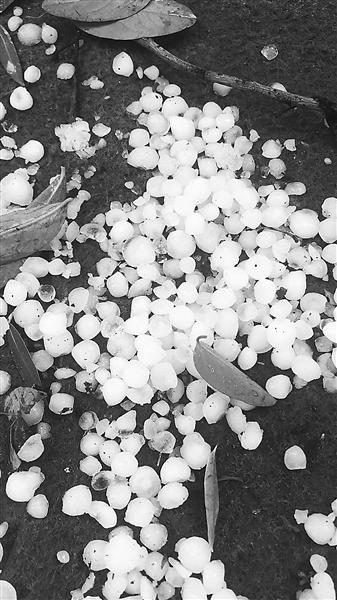 """这场骤雨冰雹不期而至玩""""快闪"""""""
