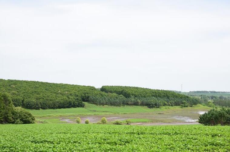 向林木要钱,让绿树生金——黑龙江省拜泉县发展绿色经济助脱贫