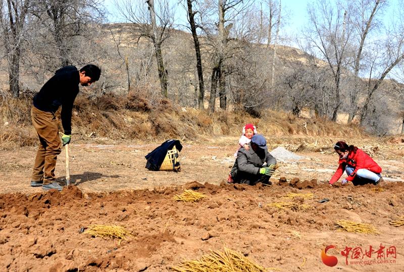 【甘肃五个一百网络正能量图片·系列展播(23)】陇西县:在春天里收获