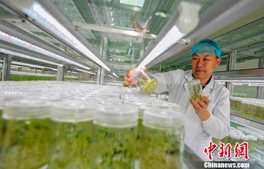 定西临洮退伍军人返乡创业30年 引良种带农户