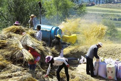 临夏州和政县卜家庄乡吊湾村的田间一派繁忙景象