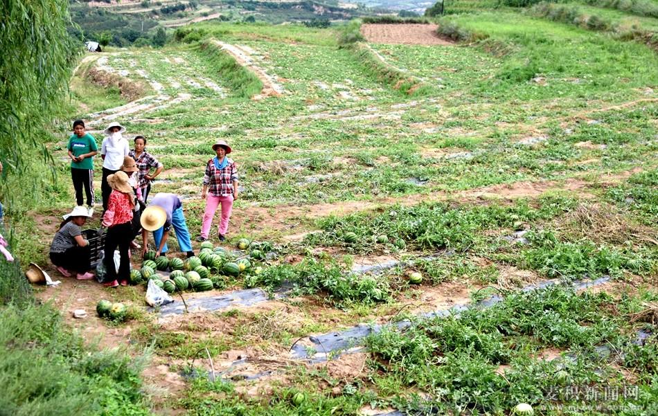 天水麦积区:走出产业扶贫新路子