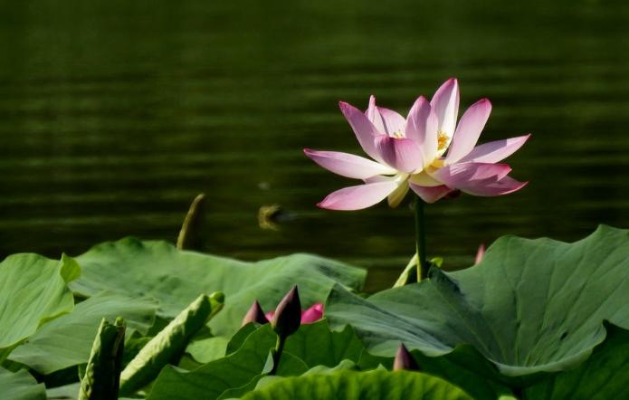 【醉美麦积】系列之:绿荷相倚满池塘