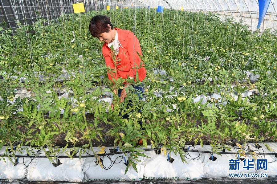 (经济)(5)甘肃酒泉:戈壁生态农业奏响增收曲