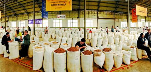 定西陇西县首阳:崛起的中药材特色小镇