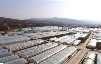 天然好菜筑就脱贫致富梦——武山县蔬菜产业发展纪实