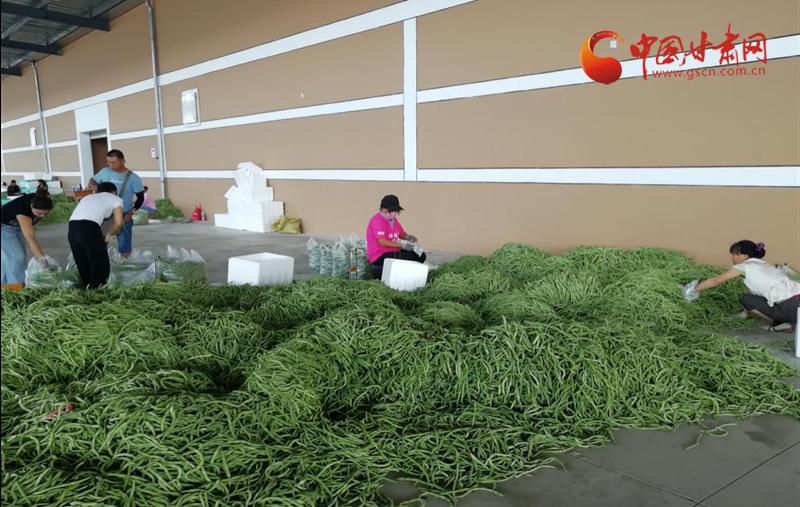 《开心快三APP下载》_好风凭借力 振兴正当时——蔬菜产业领跑武山经济再飞越