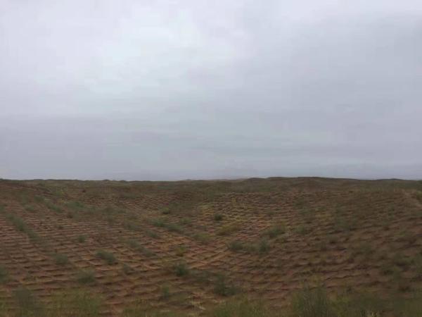 宁夏治沙样本:让沙漠倒退20多公里,为世界贡献中国经验