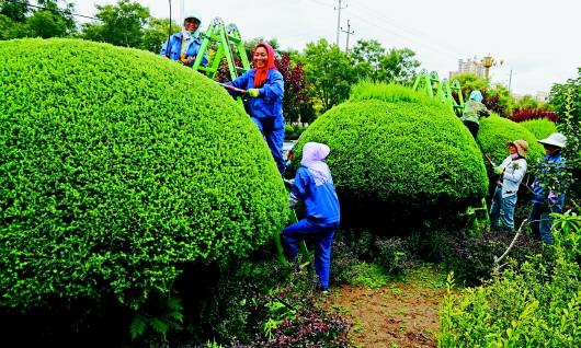 定西临洮:坚持绿色发展 建设美丽家园