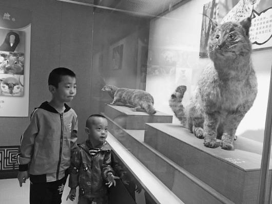 """《动""""舞""""陇原——甘肃省博物馆馆藏动物标本展》亮相陇西"""