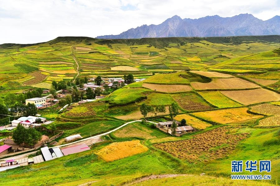 甘肃肃南:金色田园入画来