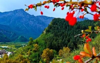 甘肃肃南:秋日祁连山层林尽染