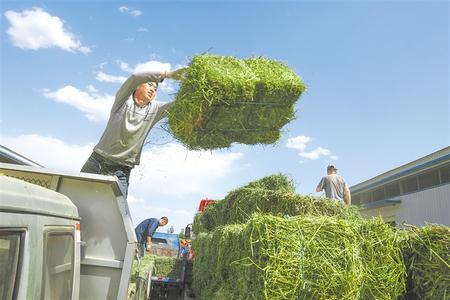 突出特色 提质增效——庆阳市草畜产业发展侧记