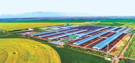 甘肃:产业带动奔小康