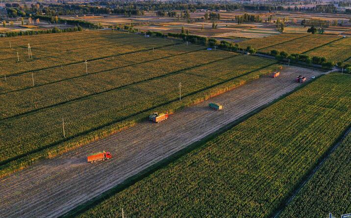 【甘肃五个一百网络正能量图片·系列展播(78)】俯瞰甘肃高台万亩玉米喜获丰收 机械化收割绘就丰收图景