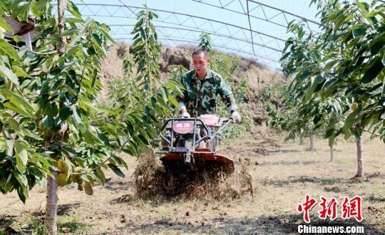 唐峰使用土地旋耕深松机在大棚里作业。 耿洋洋 摄