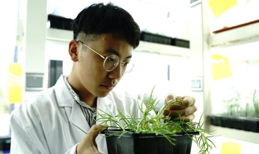 上海多地发现国家二级重点保护野生植物粗梗水蕨