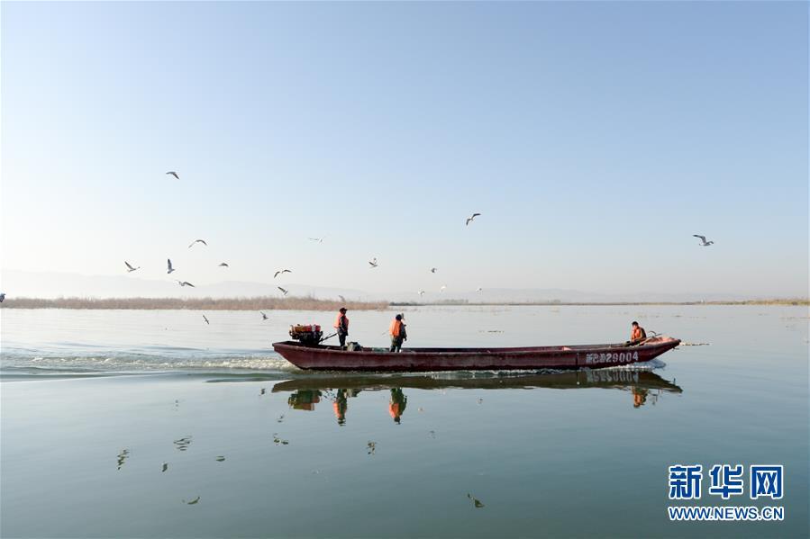 (经济)(2)新疆博斯腾湖池沼公鱼大丰收