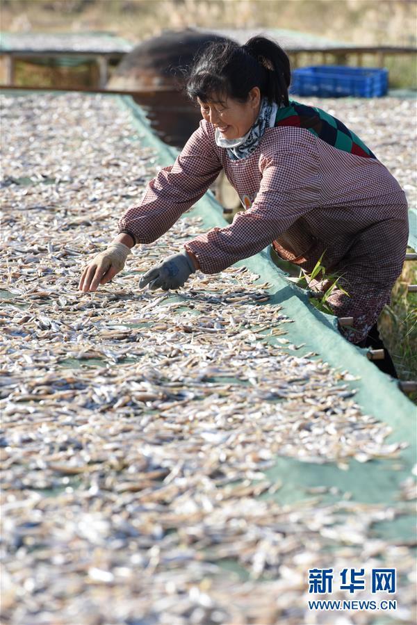 (经济)(3)新疆博斯腾湖池沼公鱼大丰收