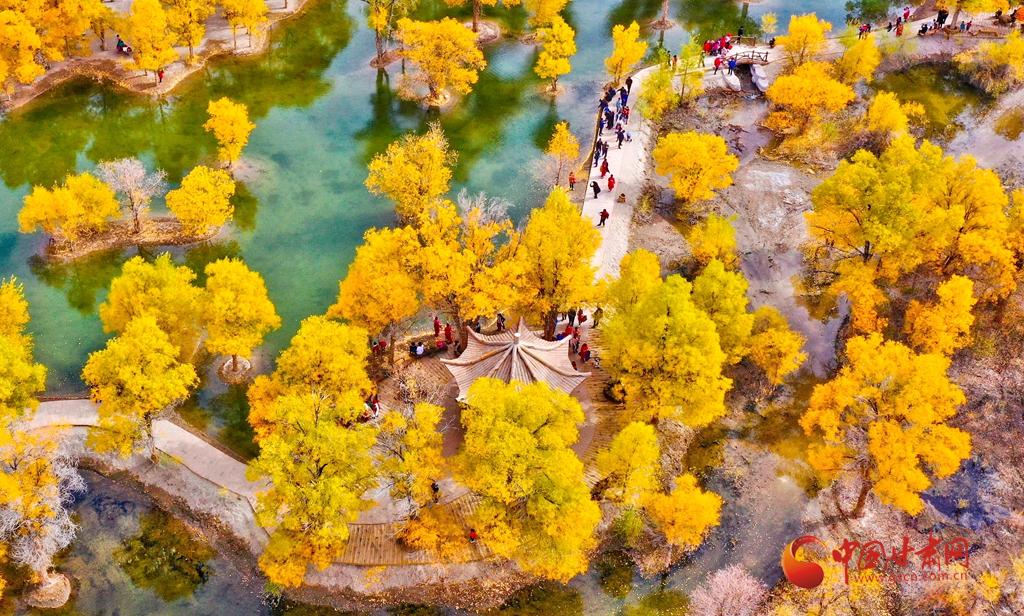 """酒泉金塔:万亩胡杨 """"醉美""""的秋天在这里"""