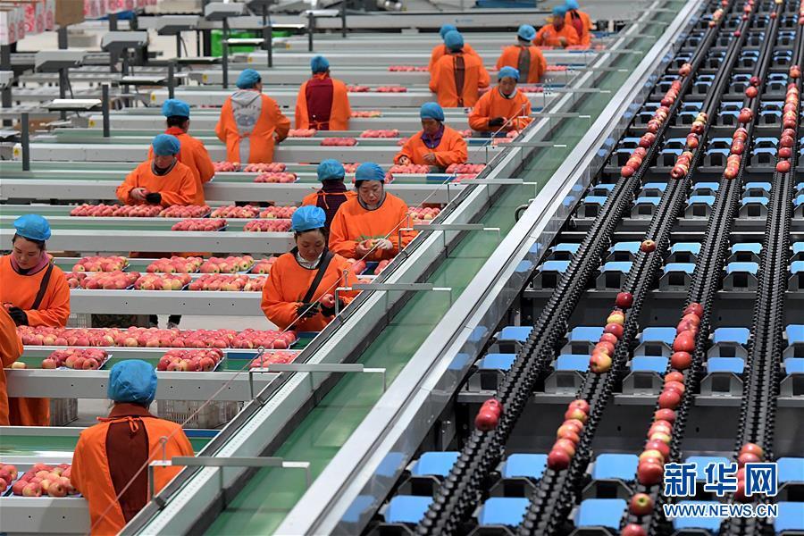 (经济)(4)小苹果带动致富大产业