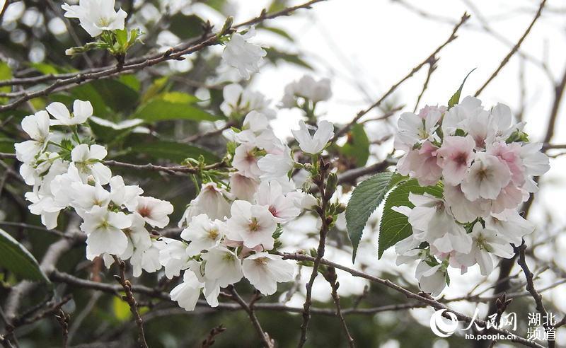 http://www.whtlwz.com/wuhanjingji/50852.html