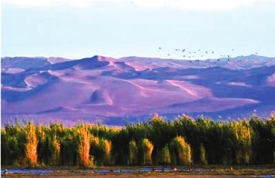敦煌阳关国家级自然保护区迎万只迁徙候鸟