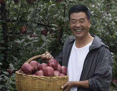 #我有甘货#礼县苹果热销68万斤 一年8.6万贫困人口增收