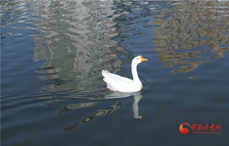 雁滩公园:菊香荷韵雁南飞 碧波荡漾秋水长