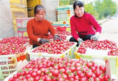临夏州永靖县不断调整农业产业结构