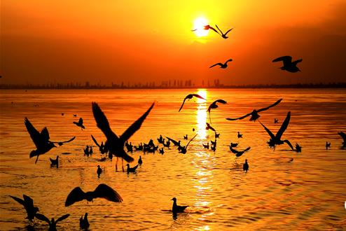 金秋沙湖:湿地深处苇花香 百鸟栖息入画图
