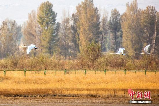 """张掖黑河湿地国家级自然保护区临泽段是候鸟的""""中转站""""。张希清 摄"""