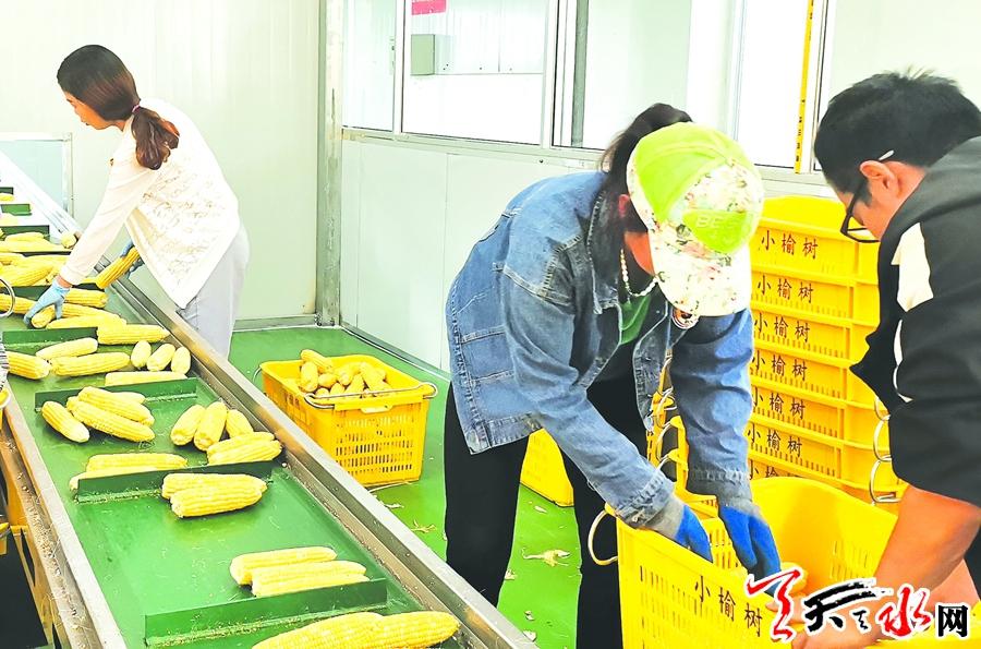 【重点项目建设·武山篇】让水果玉米成为增收新亮点