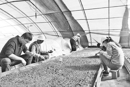 定西临洮县:强化技能培训 增加农民收入
