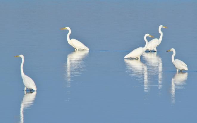 【大美甘肃】黑河湿地候鸟翔集