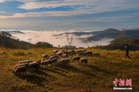 图为在关山山顶的牧羊人。谢国林 摄