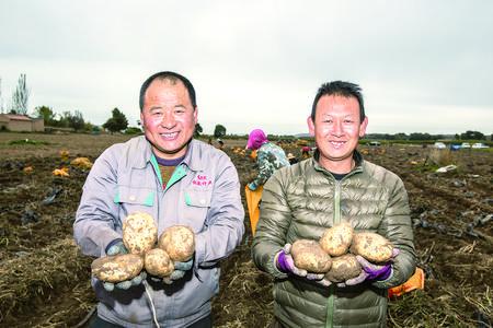 致富的土豆