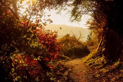 兰州云顶山美出了秋天该有的模样