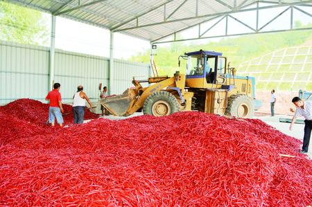 一份订单让农民种销无忧——陇南徽县探索农业产销新模式
