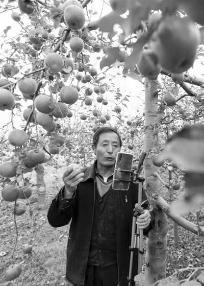 陇南礼县五旬农民网上直播卖苹果