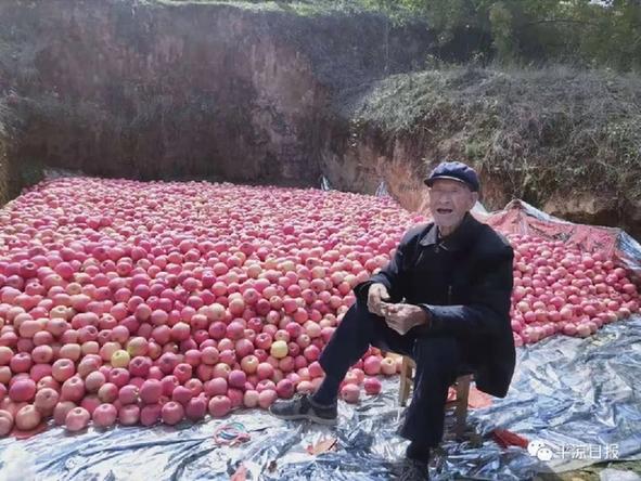 平凉苹果走进深圳:70万人能脱贫,靠的就是它