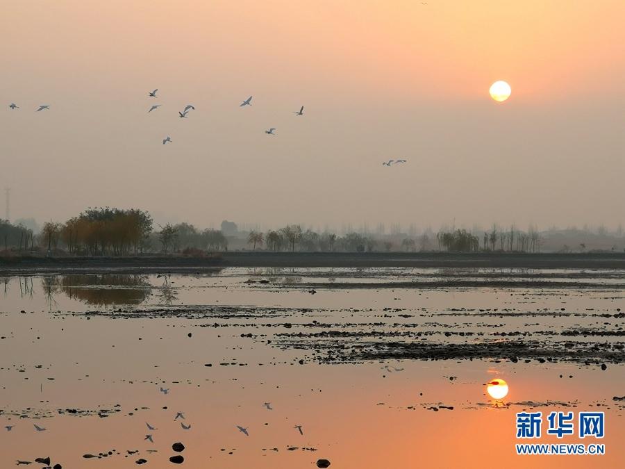 甘肃张掖:鹭舞湿地景如画