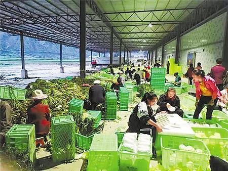甘南州壮大农牧民专业合作社助力脱贫攻坚纪实